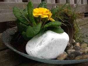 Verwerking Pasen : een graftuin maken met leeg bloempotje, gras als dak, stenen groot en klein en bloem